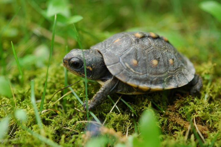 Baby_turtle.jpg