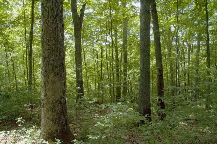 thedeepwoods.jpg