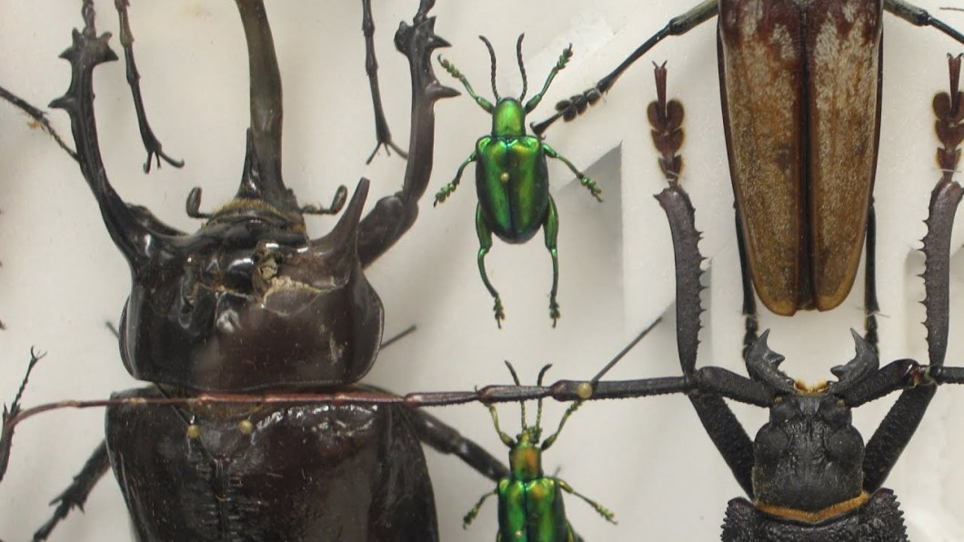 bugsbaby