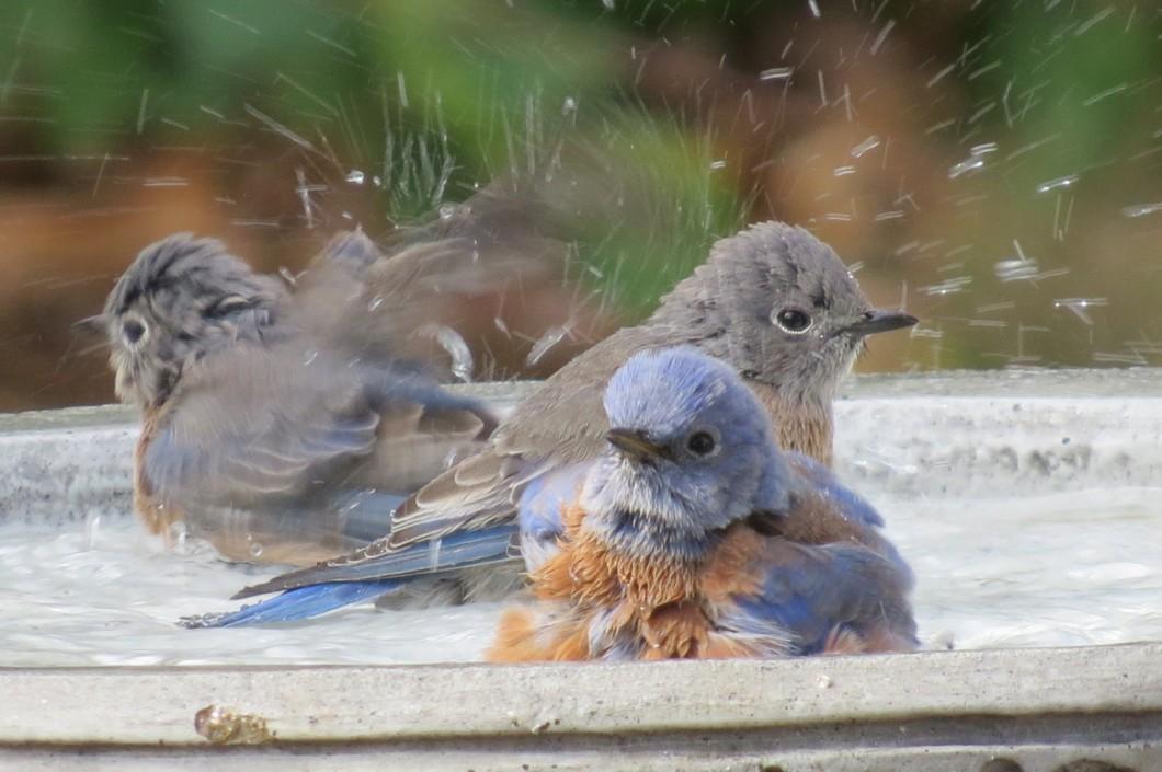 birdbath3