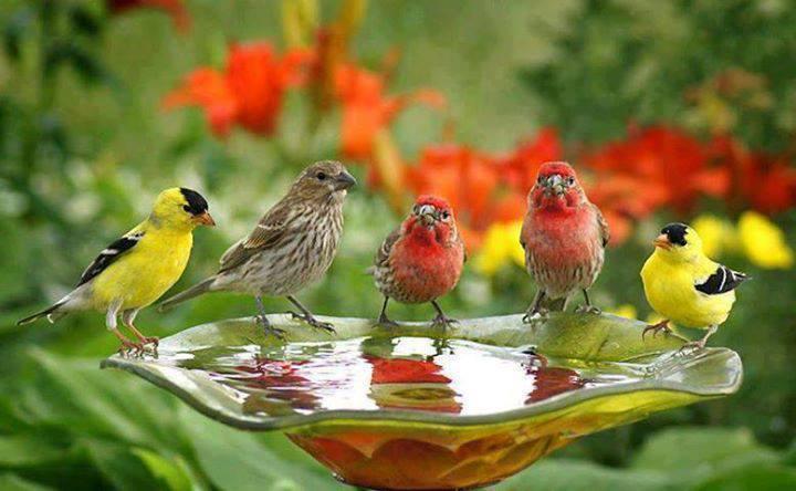 birdbathbest