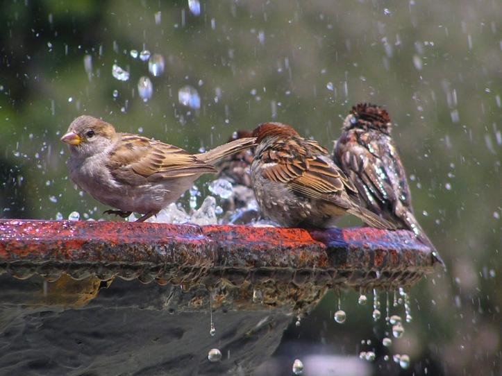 birdbean