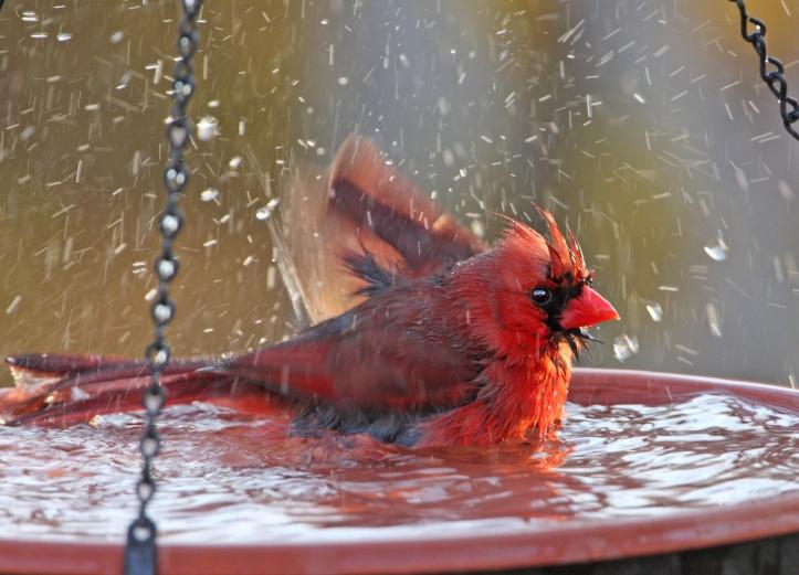 serenebird.jpg