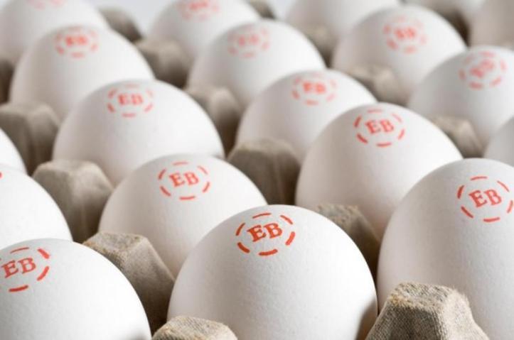 egglandsbest-eggs