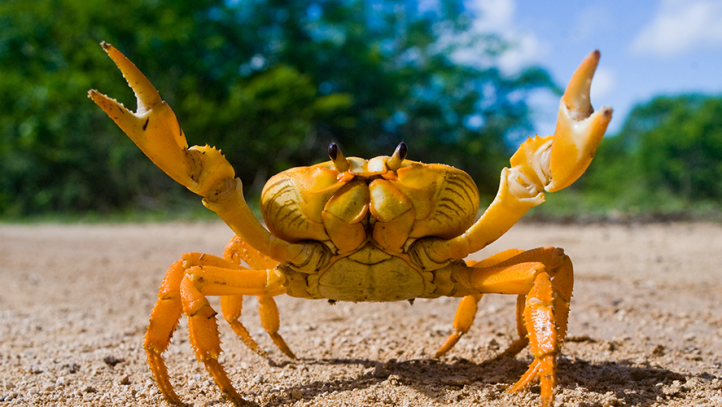 crabfriend.png