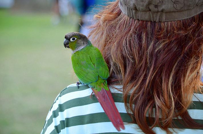 birdsecrets